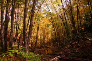 fall-trees-creek-autumn-trail